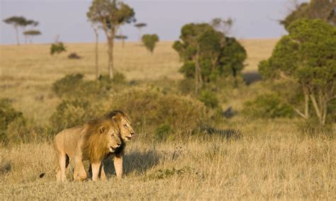 lessons  life   african plains magazine articles