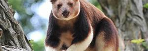 Rostock Zoo Preise : handy sammelboxen zoo rostock zum schutz von berggorillas ~ A.2002-acura-tl-radio.info Haus und Dekorationen