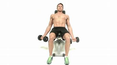 Curl Dumbbell Incline Workout Arms Biceps Huge