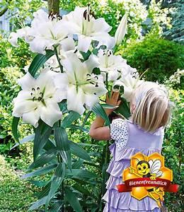 Große Zimmerpflanzen Günstig : tree lily pretty woman 3 st ck g nstig online kaufen mein sch ner garten shop ~ Markanthonyermac.com Haus und Dekorationen