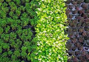 Pflanzen An Der Wand : urban gardening obi einf hrung ~ Markanthonyermac.com Haus und Dekorationen