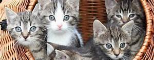 Katzen Fernhalten Von Möbeln : gewinnspiel krallen rein ber das wahre leben mit katzen ~ Sanjose-hotels-ca.com Haus und Dekorationen