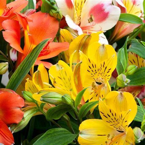 garden box design types of flowers for weddings bloomsbythebox com