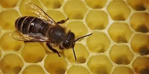 Warum Machen Bienen Honig : vegan sein und ethik ist honig wirklich verboten ~ Whattoseeinmadrid.com Haus und Dekorationen
