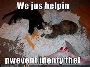 justacargal hump day humor lol catz With document shredding temecula