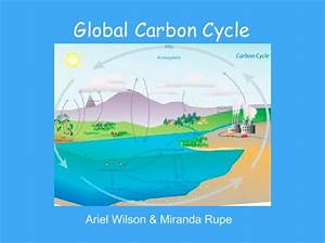 U0026quot Global Carbon Cycle U0026quot