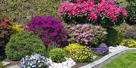 colorful bushes and shrubs how to choose plants for landscaping home design lover