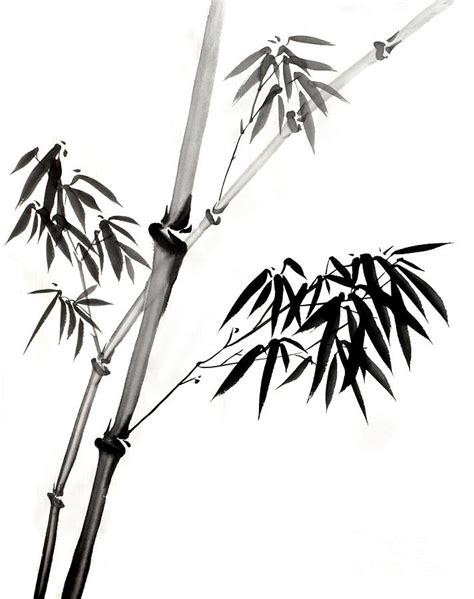 bamboo grove photo bamboo drawing