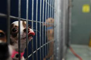 Judge taxpayer dollars wasted in arson dog adoption case for Dog shelter las vegas