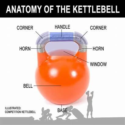 Kettlebell Anatomy Benefits Grips Cavemantraining Training Bios