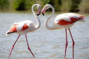 20 facts about flamingos bird trivia