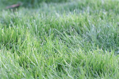 Rasenpflege Vor Dem Winter by Rasenpflege Im Fr 252 Hjahr Rasen Tipps Nach Dem Winter