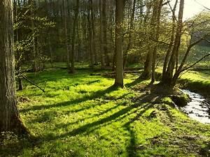 Bilder Vom Wald : hegering 4 feine hintergrundbilder schwerpunkt natur ~ Yasmunasinghe.com Haus und Dekorationen