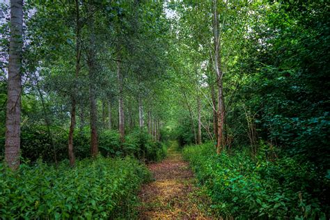 Nature, Mobile Phone, Landscape, Green, Trees, Trail, Free