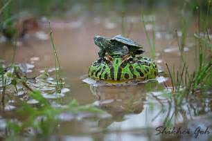 Cute Baby Reptiles