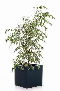 Große Winterharte Kübelpflanzen : es muss passen die richtigen pflanzk bel f r gro e ~ Michelbontemps.com Haus und Dekorationen