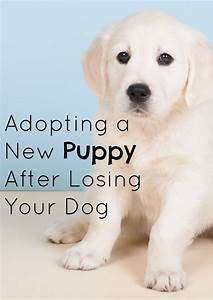adopting a new puppy after losing your dog With adopting a new dog