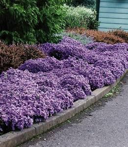 Schattenpflanzen Garten Winterhart : winterharter bodendecker aster 39 woods light blue 39 3 ~ Lizthompson.info Haus und Dekorationen