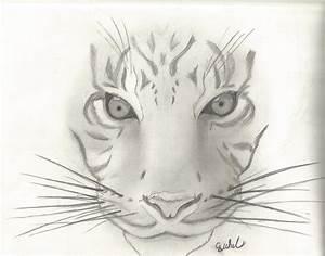 Animal Sketch # 1 ~ Tiger by cjwhit on DeviantArt