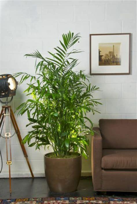 schoene zimmerpflanzen erfuellen die rolle von dekoration