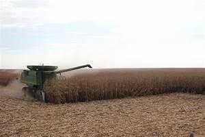 Corn Harvest 2015 - Otto Farms, Inc