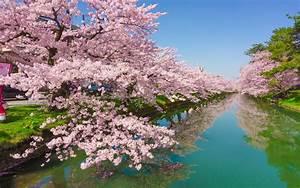 Cherry, Tree, Rose, Flowers, Green, River, Kawazu, Town, In, Japan