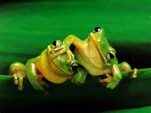 wallpaper: Funny Frogs Wallpapers