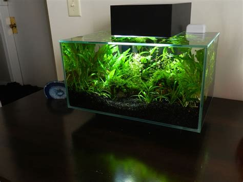 Fluval Edge Aquascape by Micr0 S Fluval Edge Terrarium Aquariam Aquarium Fish
