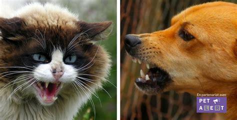 rage chez le chien ou le chat connaitre les symptomes