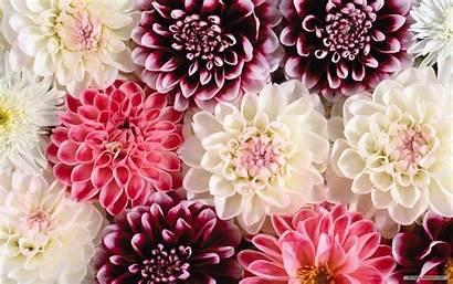 Flower Wallpapers Computer