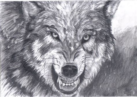 Wolf Drawing Wallpaper by Wolf Drawing Yahoo Image Search Results In 2019