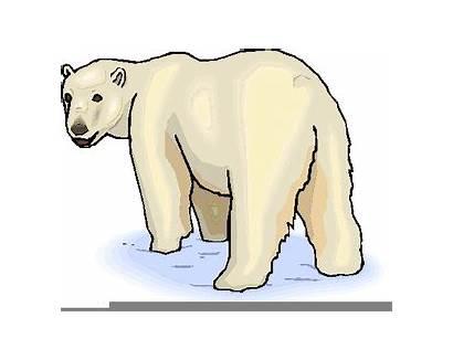Polar Clip Bears Clipart Bear Cola Coca