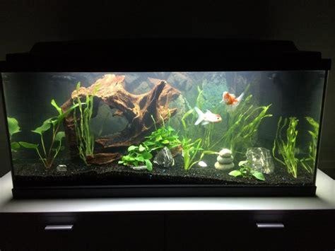 d 233 coration aquarium japonais poisson naturel
