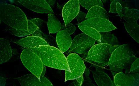 绿色植物桌面壁纸之养眼背景图片植物壁纸壁纸下载美桌网