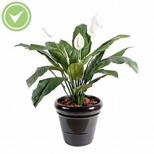 plante verte d interieur pas cher atlubcom With déco chambre bébé pas cher avec fleurs artificielles pour cimetiere pas cher