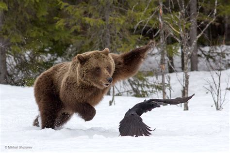 stunning finalists    wildlife photographer