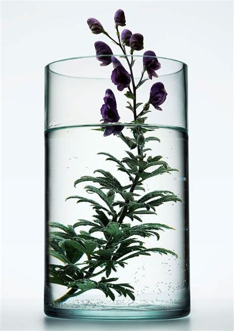 glass vase  life photography  peter lippmann