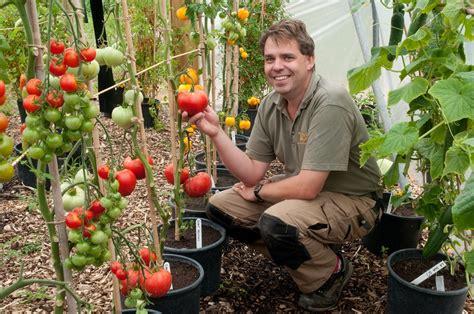 pomodoro in vaso in missouri un associazione insegna a coltivare ortaggi