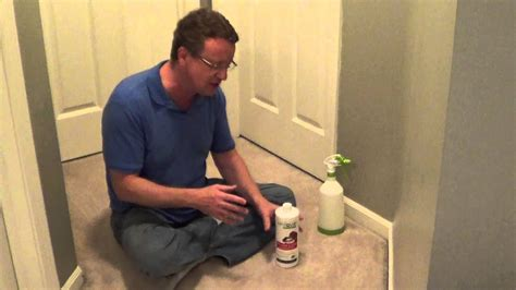 How To Clean Cat Urine  Removing Cat Urine From Carpet