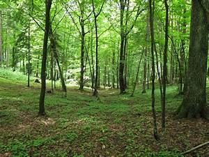 Knyszyń Forest Landscape Park - Wikiwand