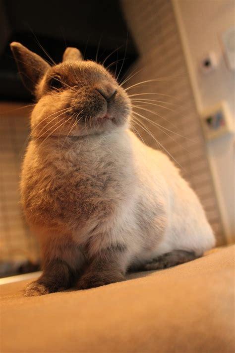 1012 Best Cute Rabbit Pictures Images On Pinterest