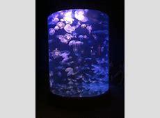 ¿Regalos originales? Una lámparapecera de medusas
