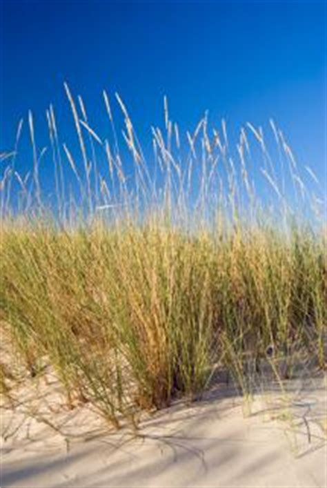 coastal landscape design ideas lovetoknow