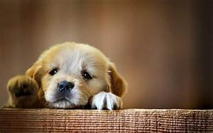 50+ Cute Dogs Wallpapers | Dog Puppy Desktop Wallpapers ...