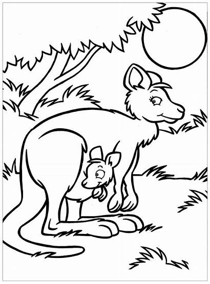 Coloring Kangaroos Pages Funny Children Printable Justcolor