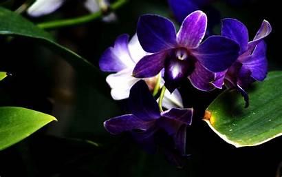 Orchid Purple Flower Orchids Wallpapers Desktop Zen