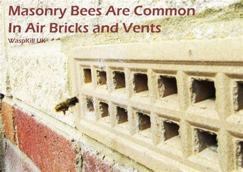 masonry bees and mortar bee waspkill uk pest