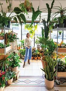 These, Lush, Houseplants, Are, Your, New, Low