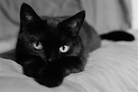 """Black Cat Month"""" (via About.com)"""