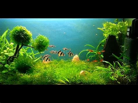 Tutorial Aquascape Prato Acquario Step By Step Aquarium